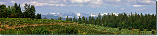 Grace Vineyards, El Dorado County